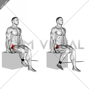 Band Seated Hip Internal Rotation