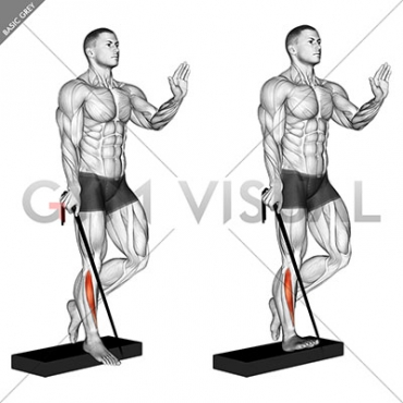 Band single leg reverse calf raise