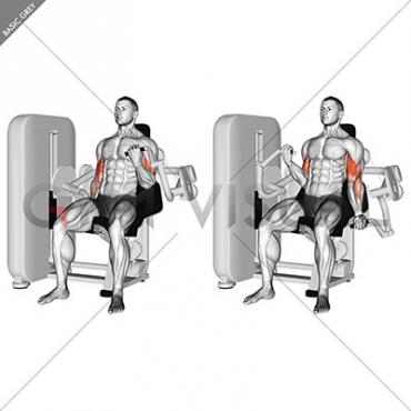 Lever Alternate Biceps Curl