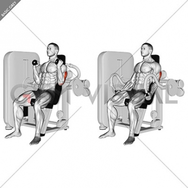 Lever Triceps Extension