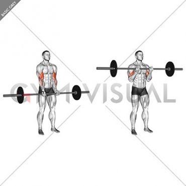 Barbell Standing Close Grip Curl