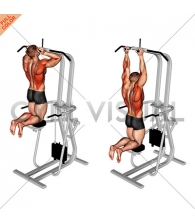 Assisted Parallel Close Grip Pull-up