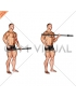Barbell Alternate Biceps Curl