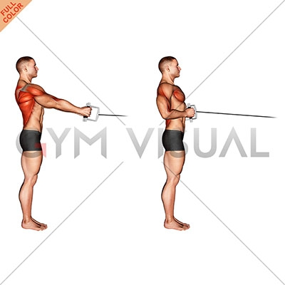 Standing Cable Row With Rope