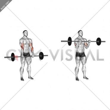 Barbell Standing Reverse Grip Curl