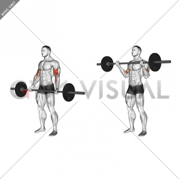 Barbell Standing Wide-grip Curl
