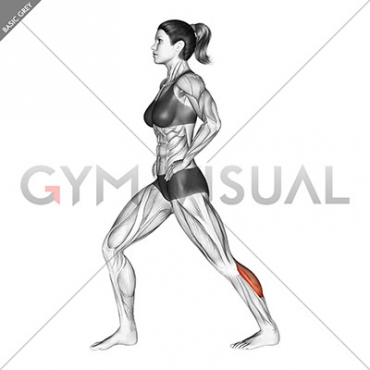 Lunging Straight Leg Calf Stretch