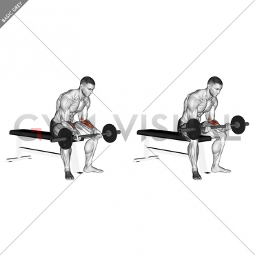 Barbell Wrist Curl (version 2)