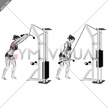 Cable straight arm pulldown (version 2)