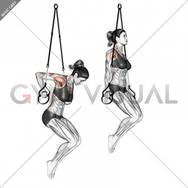 Suspension Chest Dip