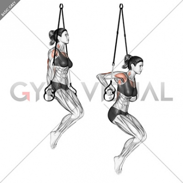 Suspension Triceps Dip
