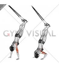 Suspension Handstand Push-up