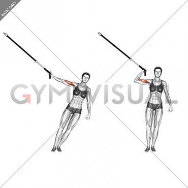 Suspension One Arm Biceps Curl