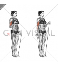 Alternate Biceps Curl (with band)
