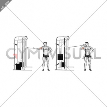 Cable one arm inner biceps curl