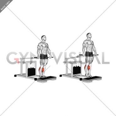 Lever Calf Raise (bench press machine)