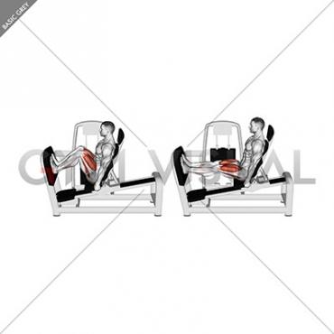 Lever Seated Squat