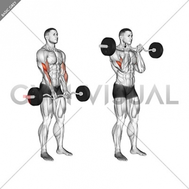 EZ Barbell Close-grip Curl