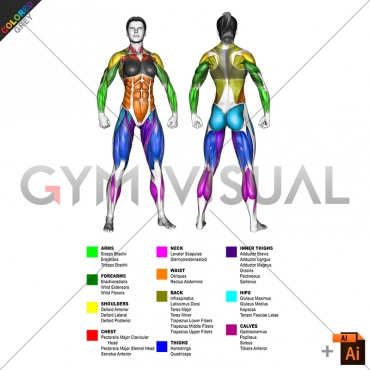 By BODY PARTS Muscle body female (slightly rotate)