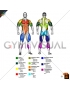 By MAJOR MUSCLE GROUPS Muscle body male (slightly rotate)