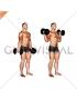 Dumbbell Standing Inner Biceps Curl