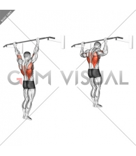 Wide Grip Rear Pull-Up