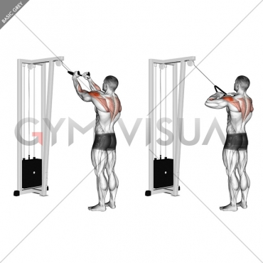 Cable Rear Delt Row (with rope)