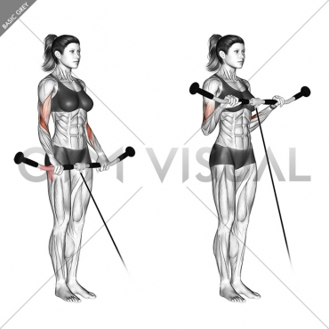 Cable Reverse Curl