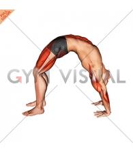 Wheel Pose Yoga Pose