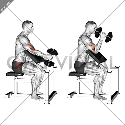 Single arm hammer curls