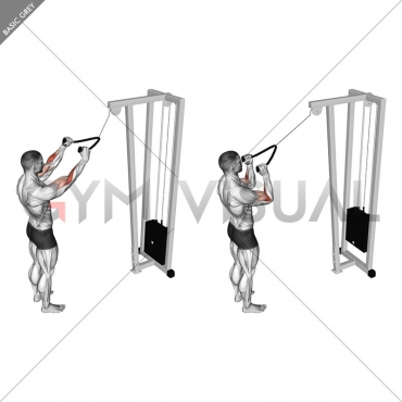 Cable Standing Pulldown (with rope)