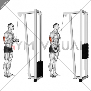 Cable Triceps Pushdown (V-bar)
