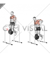 Weighted Triceps Dip on High Parallel Bars