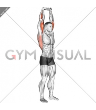 Extension Of Arms In Vertical Stretch