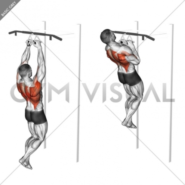Chin-ups (narrow parallel grip)