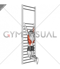 Two handed hang back stretch (with Training Wall Bars)