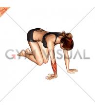 Wrist Ulnar Deviator And Extensor Stretch