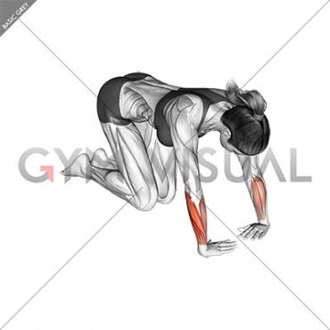 Wrist Ulnar Deviator And Flexor Stretch