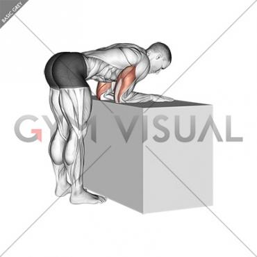 Elbow Extensor Anconeus Stretch