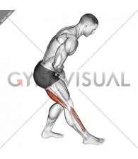 Standing Toe Down Hamstring Stretch