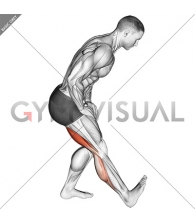 Standing Toe Up Hamstring Stretch