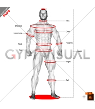 Measurement (male)
