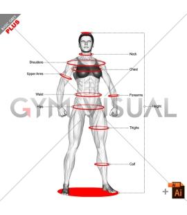 Measurement (female)