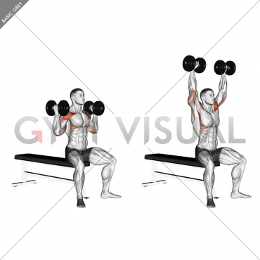 Dumbbell Arnold Press (version 2)