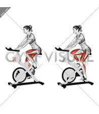 Stationary Bike Run (version 3) (female)