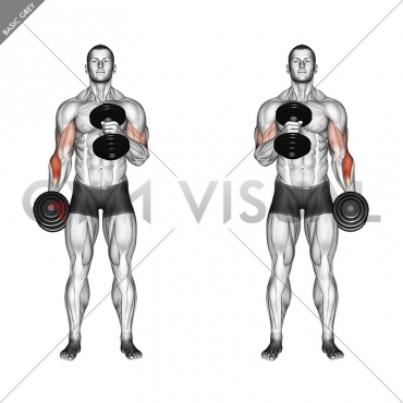 Dumbbell Cross Body Hammer Curl