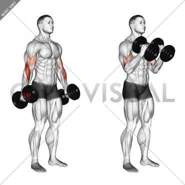 Dumbbell Hammer Curl (version 2)