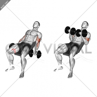 Dumbbell Incline Curl (version 2)