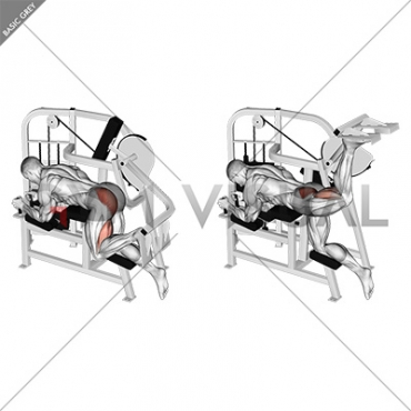 Lever Hip Extension (VERSION 2)