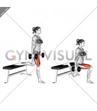 Dumbbell Bulgarian Split Squat (female)
